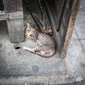 bangkok cica